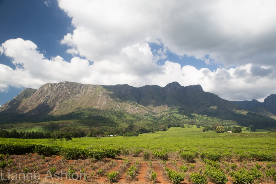 view-of-mulanje-masif