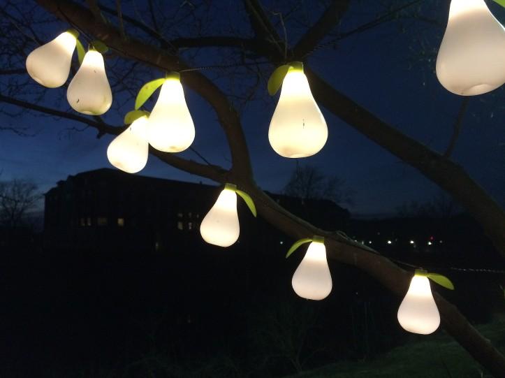 pear lights