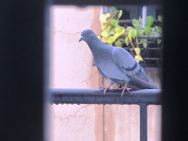 stray-birds-photo-poetry