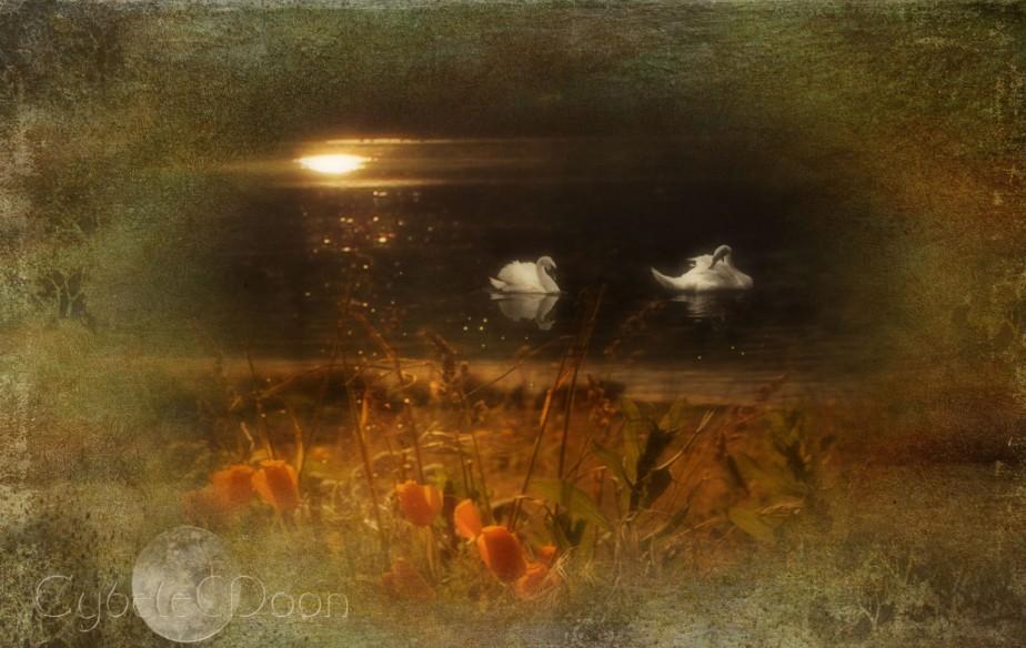 swans-best
