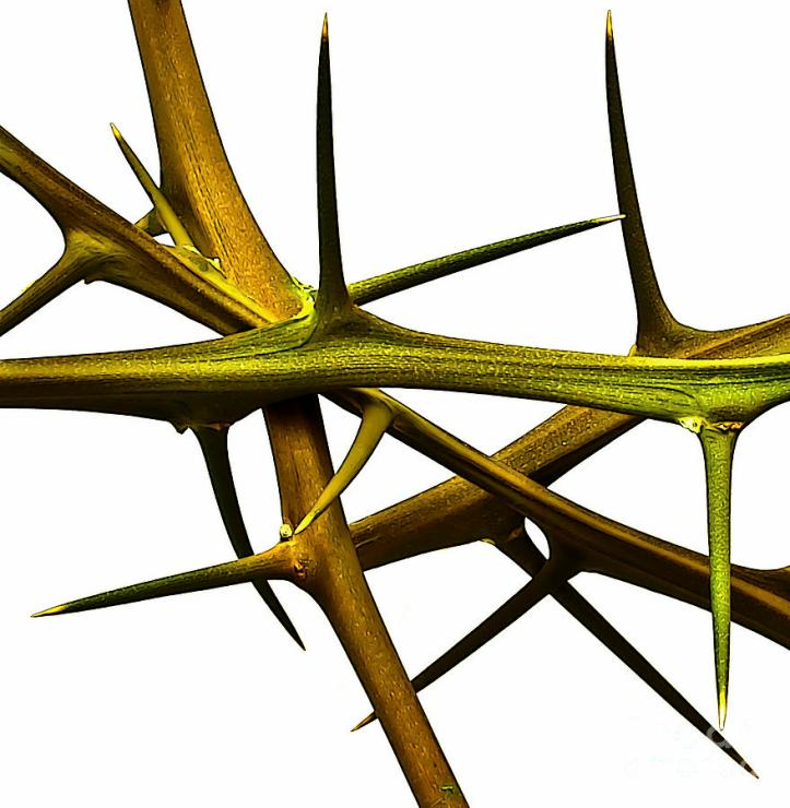 lemon-thorns-walt-foegelle