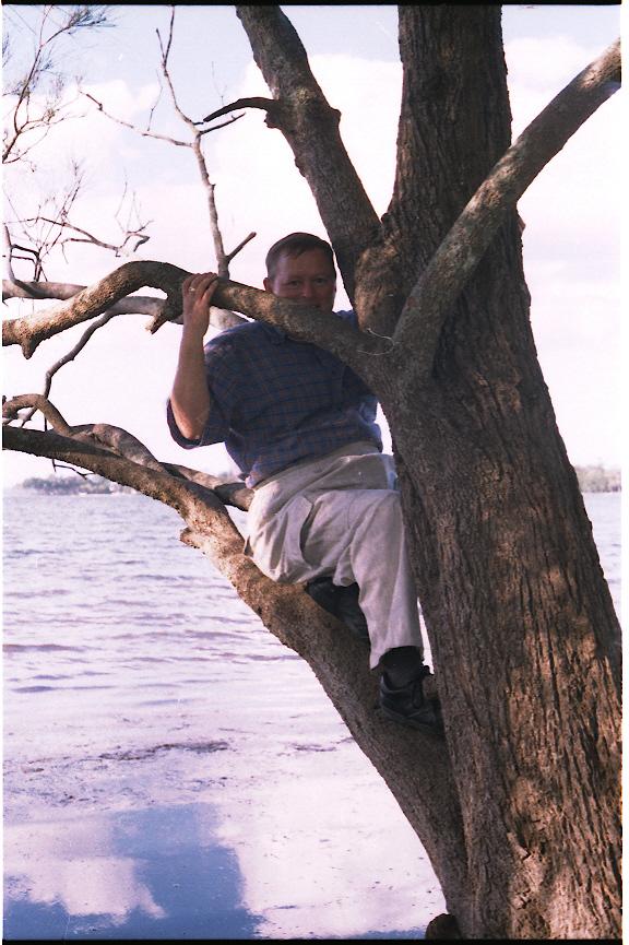 Andrew up tree