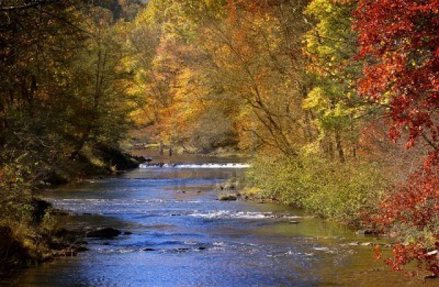BP; Autumn Trees by the River in Monogahela National Forest