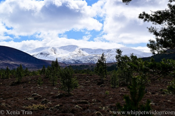 a snow-covered corrie in the Cairngorms